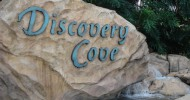 Discovery Cove Named #1 Amusement Park in the World Again!