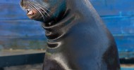 SeaWorld's Clyde & Seamore to sail into the sunset!