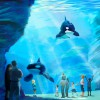 SeaWorld Plans New Programs To Protect Ocean Health and Killer Whales