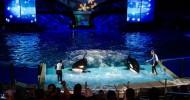 SeaWorld's Christmas Celebration Starts Today!