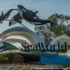SeaWorld Orlando's Antarctica Welcomes Eight Penguin Chicks