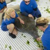 SeaWorld Orlando Animal Team Rescues 13th Manatee