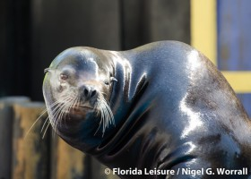 """SeaWorld Orlando's  All-New """"Clyde and Seamore's Sea Lion High""""  to Open April 16"""