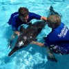 SeaWorld Orlando Cares For Beached Rough-Toothed Dolphin  This Father's Day