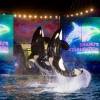 SeaWorld announces all-new summer concert series and Aquatica offers all-new beach party bash!