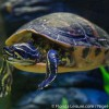 SEA LIFE Orlando Aquarium Celebrates Earth Day with new Turtle Fest exhibit