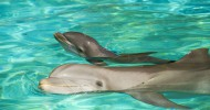 Discovery Cove celebrates birth of five bottlenose dolphins