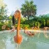 Flamingos at SeaWorld Orlando Explore Giant Pumpkin Patch On the First Day of Fall