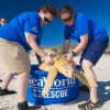 SeaWorld Orlando returns four rehabilitated Loggerhead Sea Turtles to the wild