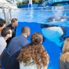 SeaWorld adds new Killer Whale Up-Close Tour